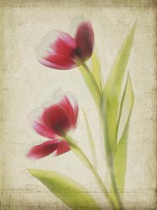 Parchment Flowers III by Judy Stalus