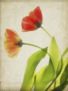 Parchment Flowers VI by Judy Stalus