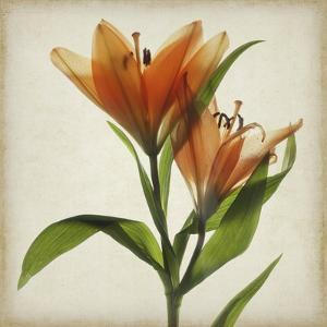 Parchment Flowers X by Judy Stalus