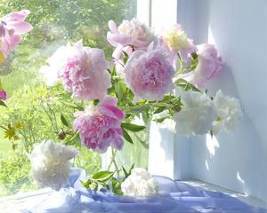 Peony Bouquet by Judy Stalus