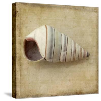 Sepia Shell IV