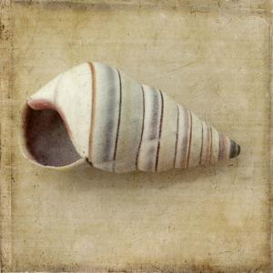 Sepia Shell IV by Judy Stalus