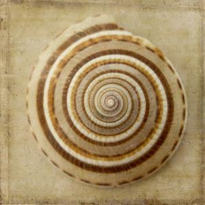 Sepia Shell V by Judy Stalus