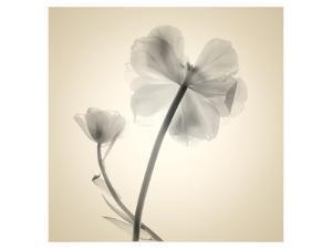 Tulips II by Judy Stalus