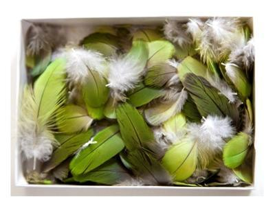 Parrot Feathers, no. 3