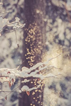 Forest, winter, snow, glitter