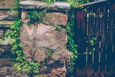 Gate, wall, plant, Russianvine