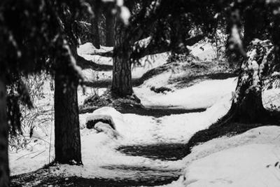 Wood, way, trees by Jule Leibnitz