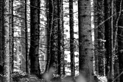 Wood by Jule Leibnitz