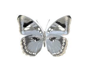Butterfly in Grey I by Julia Bosco