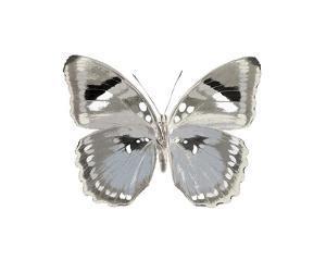 Butterfly in Grey II by Julia Bosco