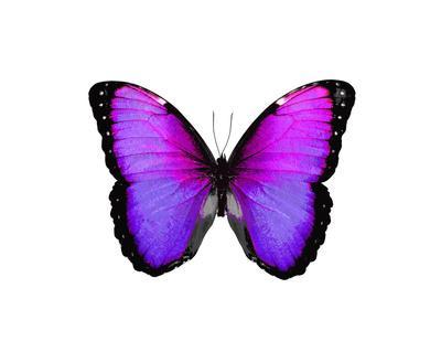 Vibrant Butterfly IV