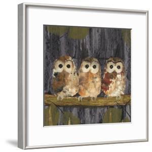 Three Tawny Owls by Julia Burns