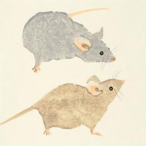 Timid Mice by Julia Burns