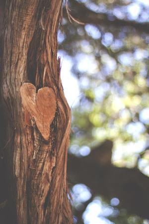 Heart in Tree by Julia Goss