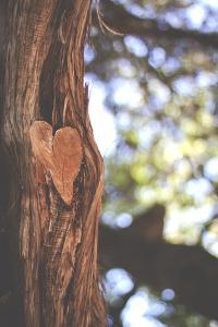 Heart in Tree by Julia Goss