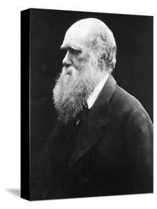 Charles Darwin, C.1870 (B/W Photo) by Julia Margaret Cameron
