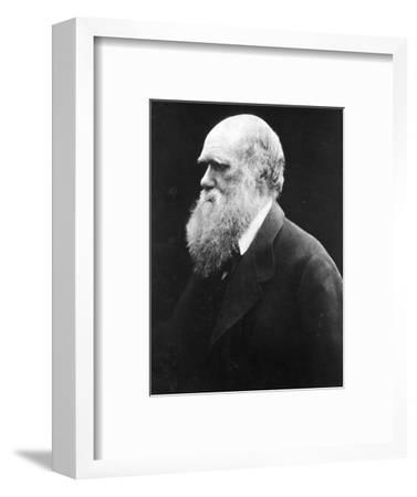 Charles Darwin, C.1870 (B/W Photo)
