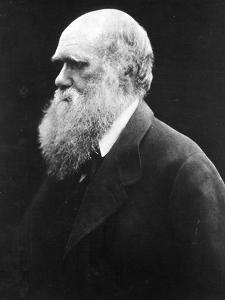 Charles Darwin, C.1870 (B/W Photo) by Julia Margaret Cameron