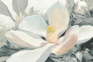 Majestic Magnolia Green Gray Crop by Julia Purinton