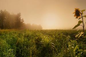 Misty morning by Julia Shepeleva