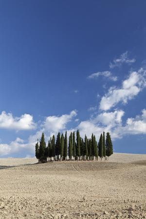 Cypress Trees Near San Quirico D'Orcia, Tuscany, Italy