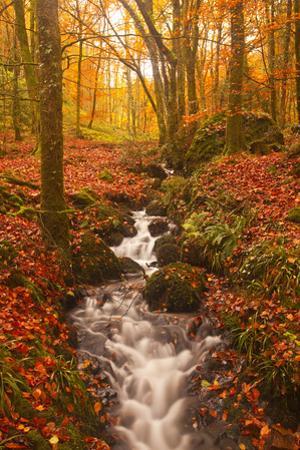 A Small Stream Running Through Charles Wood by Julian Elliott