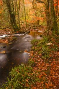 Autumn Colours around the River Teign and Hannicombe Wood Near to Fingle Bridge by Julian Elliott