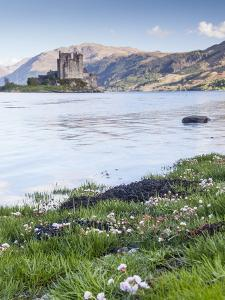 Seathrift Flowers in Front of Eilean Donan Castle and Loch Duich, Highlands, Scotland by Julian Elliott