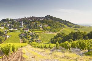 The Vineyards of Sancerre in the Loire Valley, Cher, Centre, France, Europe by Julian Elliott