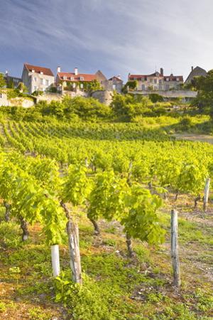 Vineyards Below the Hilltop Village of Vezelay, Yonne, Burgundy, France, Europe by Julian Elliott