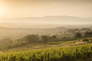 Vineyards Near to Montefalco, Umbria, Ittaly, Europe by Julian Elliott