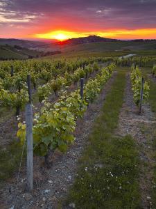 Vineyards, Sancerre, Cher, Loire Valley, Centre, France, Europe by Julian Elliott
