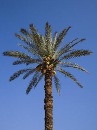 Palm Tree Growing in Karnak Temple, Luxor, Egypt by Julian Love