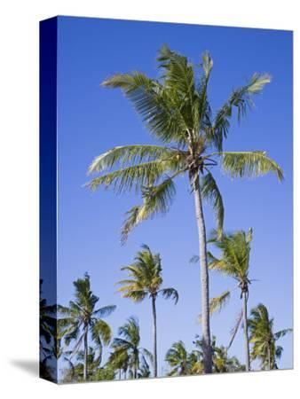 Palm Trees on Ibo Island, Part of the Quirimbas Archipelago, Mozambique