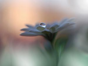 Eyes of the Light by Juliana Nan