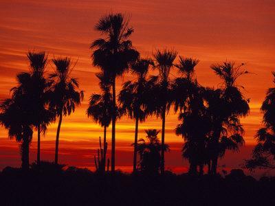 Sunset, The Pantanal, Matto Grosso Du Sul, Brazil