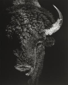 Black Glimpse I by Julie Chapman