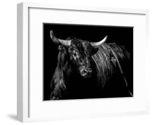Brindle Rodeo Bull by Julie Chapman