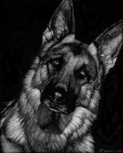 Canine Scratchboard II by Julie Chapman