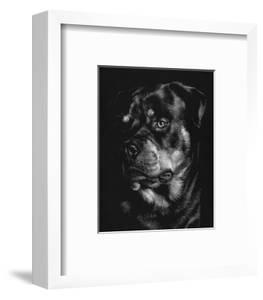 Canine Scratchboard XII by Julie Chapman