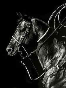 Scratchboard Rodeo V by Julie Chapman