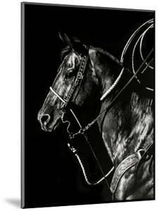 Scratchboard Rodeo V by Julie Chapman