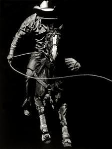 Scratchboard Rodeo VIII by Julie Chapman