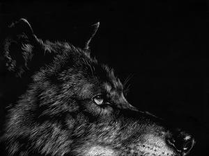 Scratchboard Wolf I by Julie Chapman