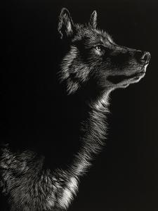 Scratchboard Wolf II by Julie Chapman