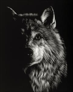 Scratchboard Wolf III by Julie Chapman