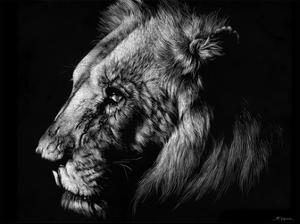 Wildlife Scratchboards I by Julie Chapman