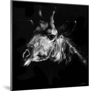 Wildlife Scratchboards VI by Julie Chapman