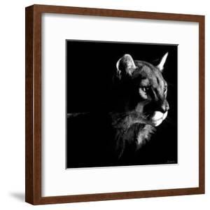 Wildlife Scratchboards VII by Julie Chapman